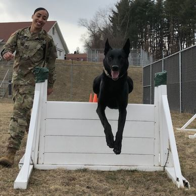 Guard Soldier's Desire to Do More Leads to Dream Job Training Dogs